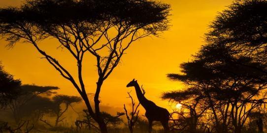 Africa-Oceania (Desde Abril 2019)