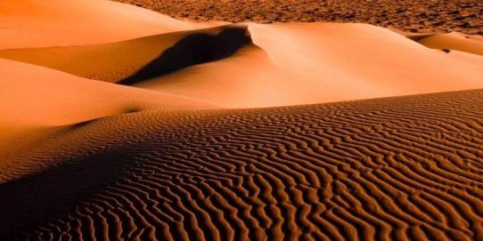 Tour por el desierto de Sonora