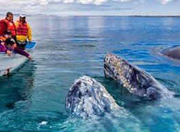 Viaje La Paz y ballenas
