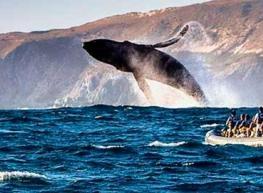Ballenas, Cabo y La Paz