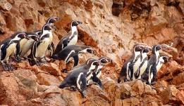 Isla Ballestas + Reserva Nac. Paracas
