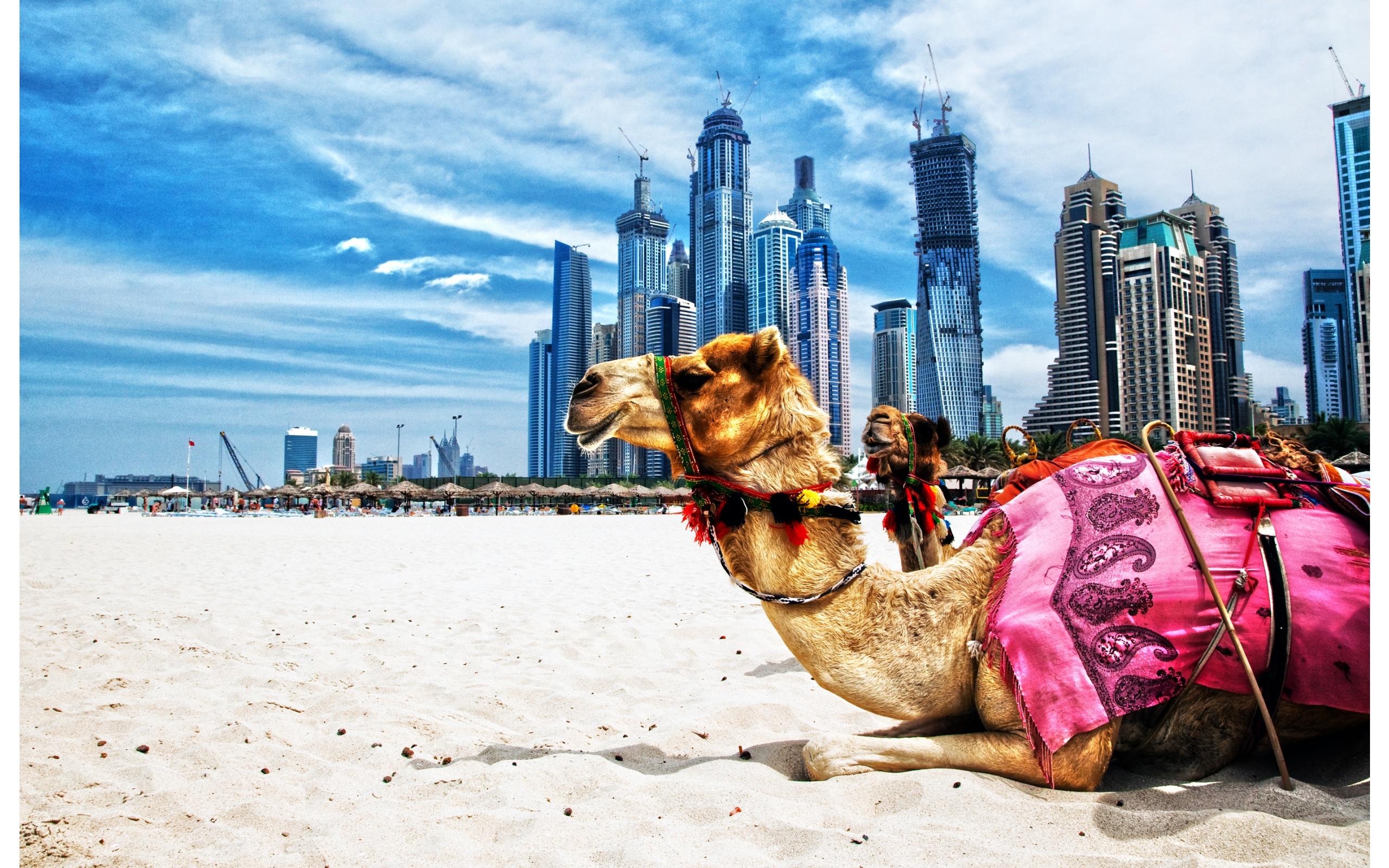 LAS MAGIAS DEL ORIENTE (Turquia, Egipto y Dubai)